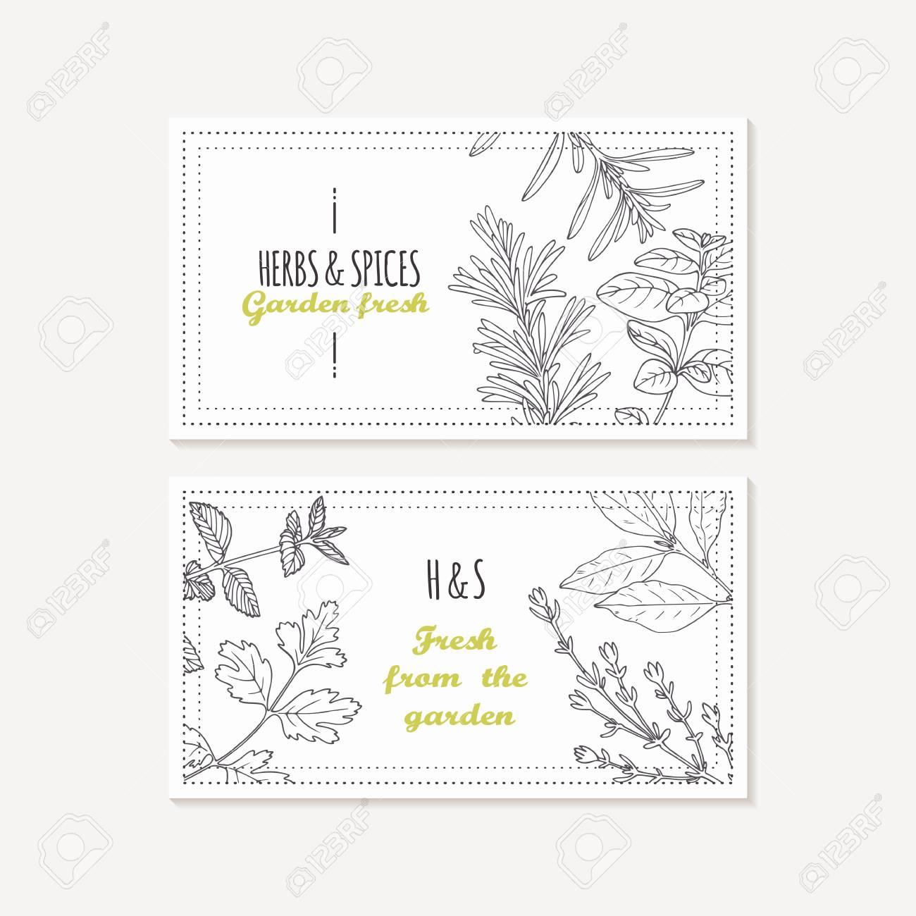 Modles De Carte Visite Avec Des Herbes Pices Dessins La