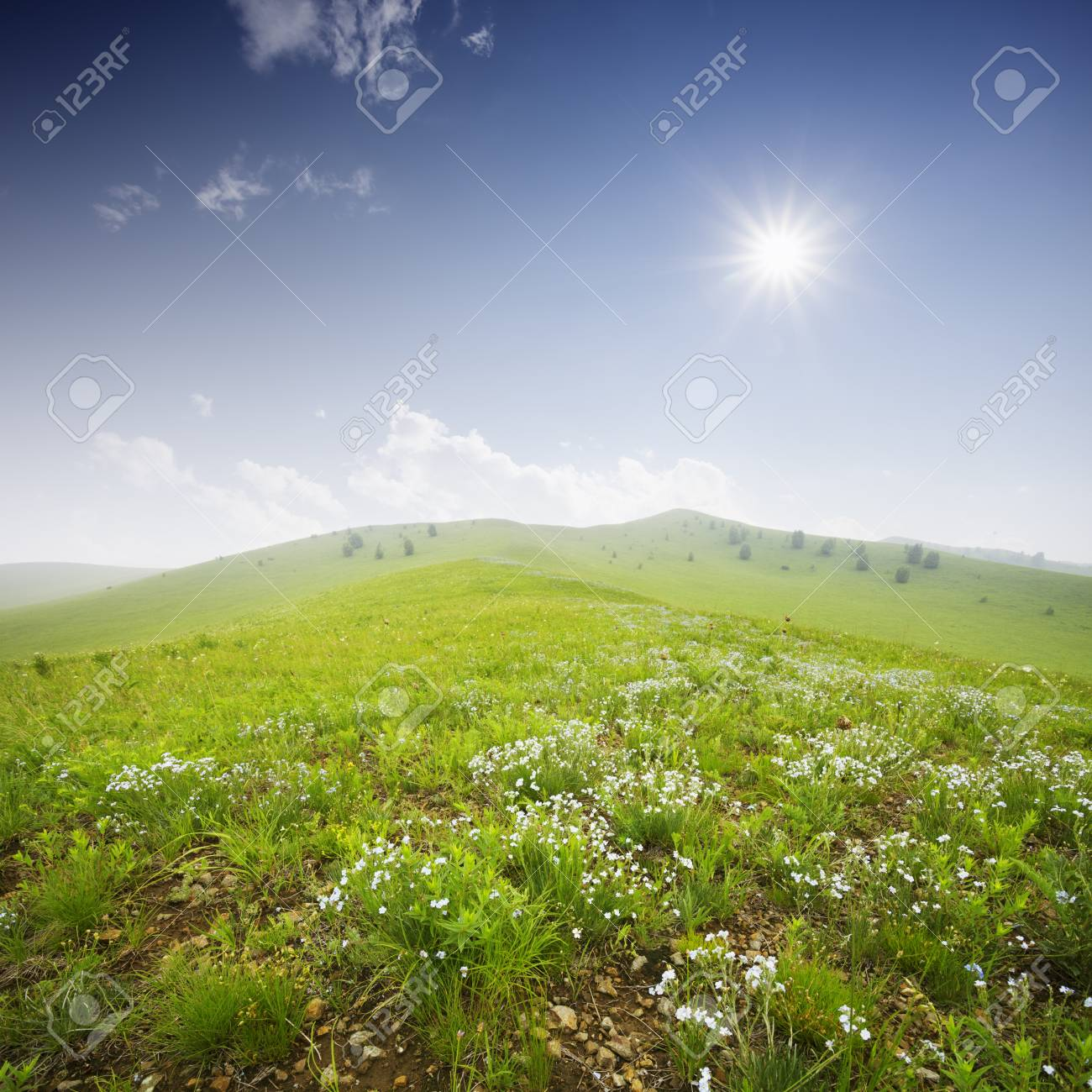 Green field with white clouds and blue sky Stock Photo - 15495062
