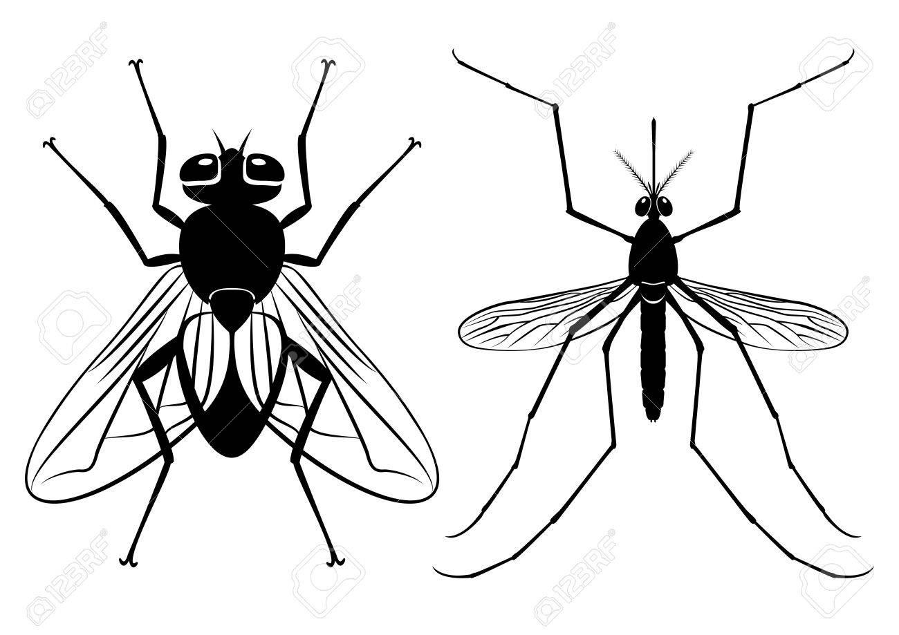 Atemberaubend Die Anatomie Einer Fliege Bilder - Anatomie Von ...
