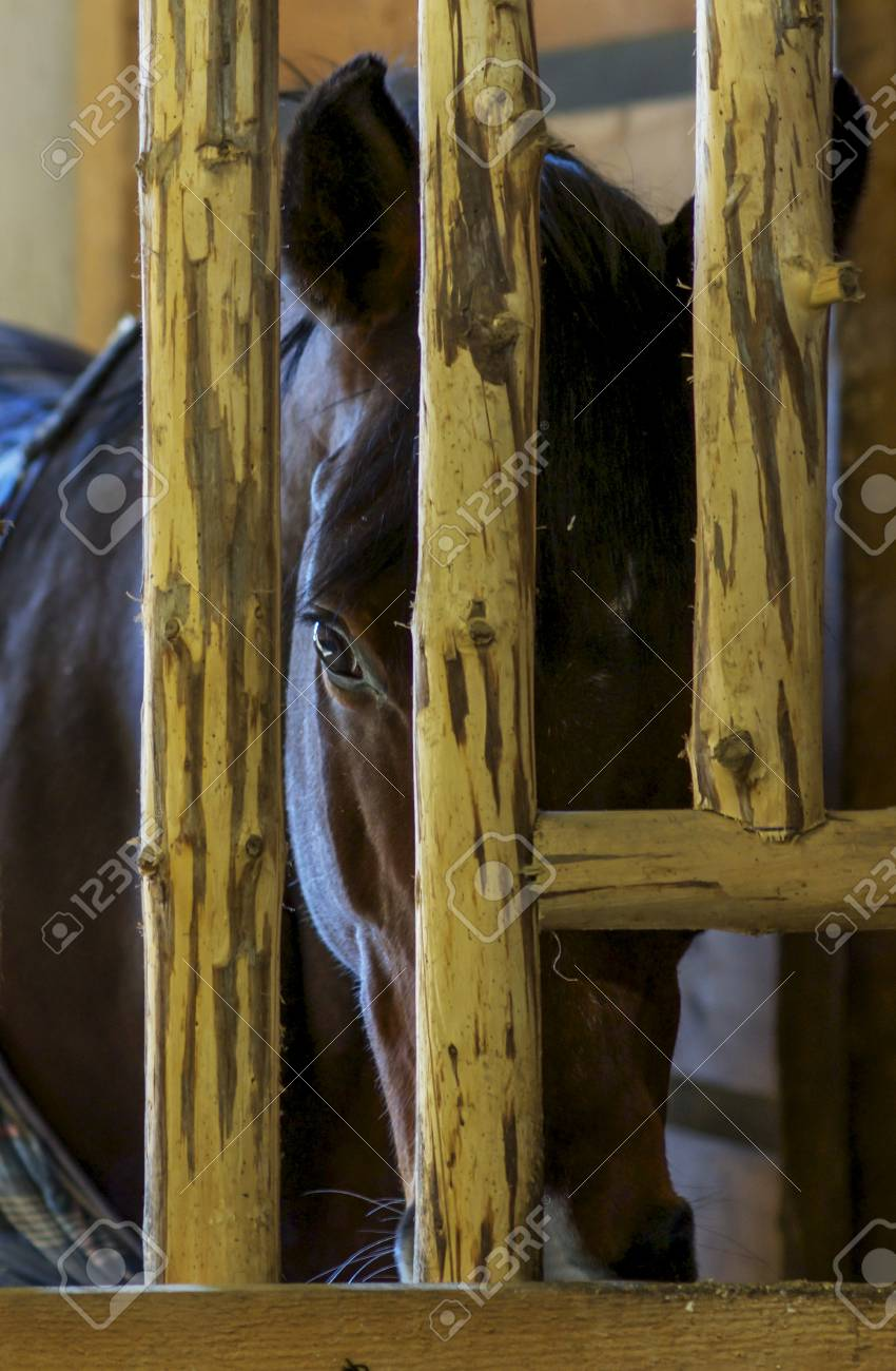 Beautiful Horse In The Stables Stock Photo Picture And Royalty Free Image Image 99741582