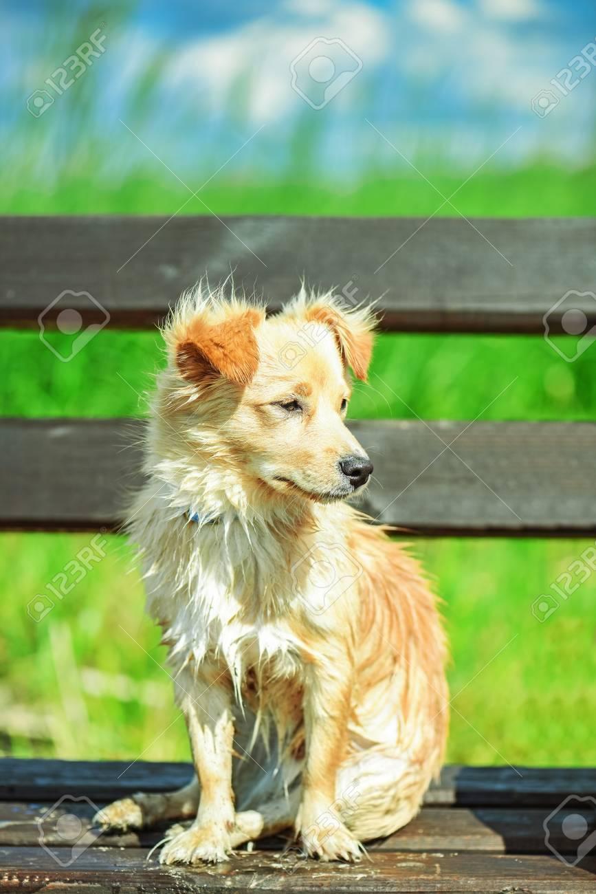 Groovy Small Yard Dog Sitting On Bench In Summer Green Park Frankydiablos Diy Chair Ideas Frankydiabloscom
