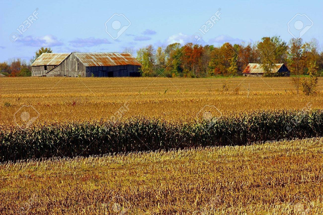 old barn on corn farmland in the fall season Stock Photo - 5702405