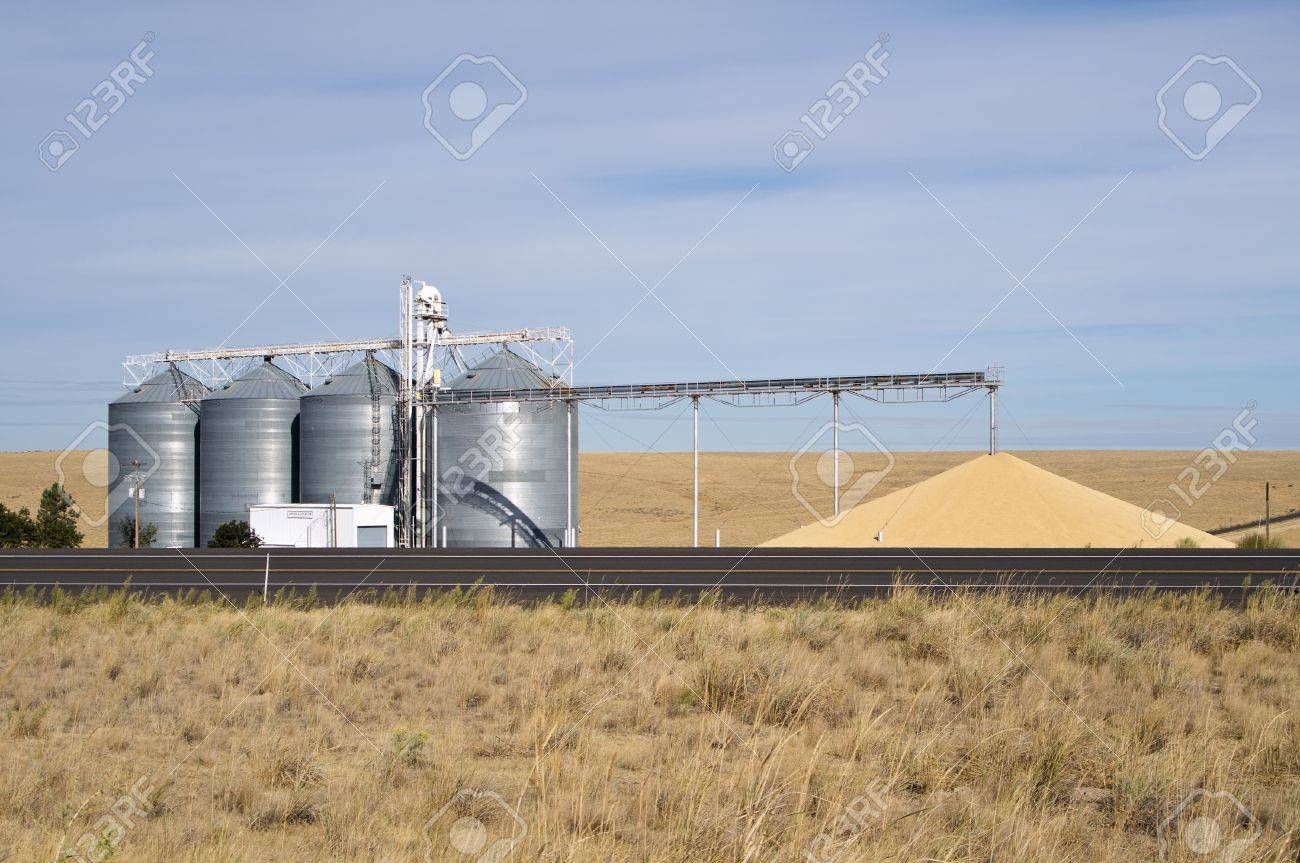 Grain being dumped on ground from silos as excess to storage capacity Stock Photo - 10899595