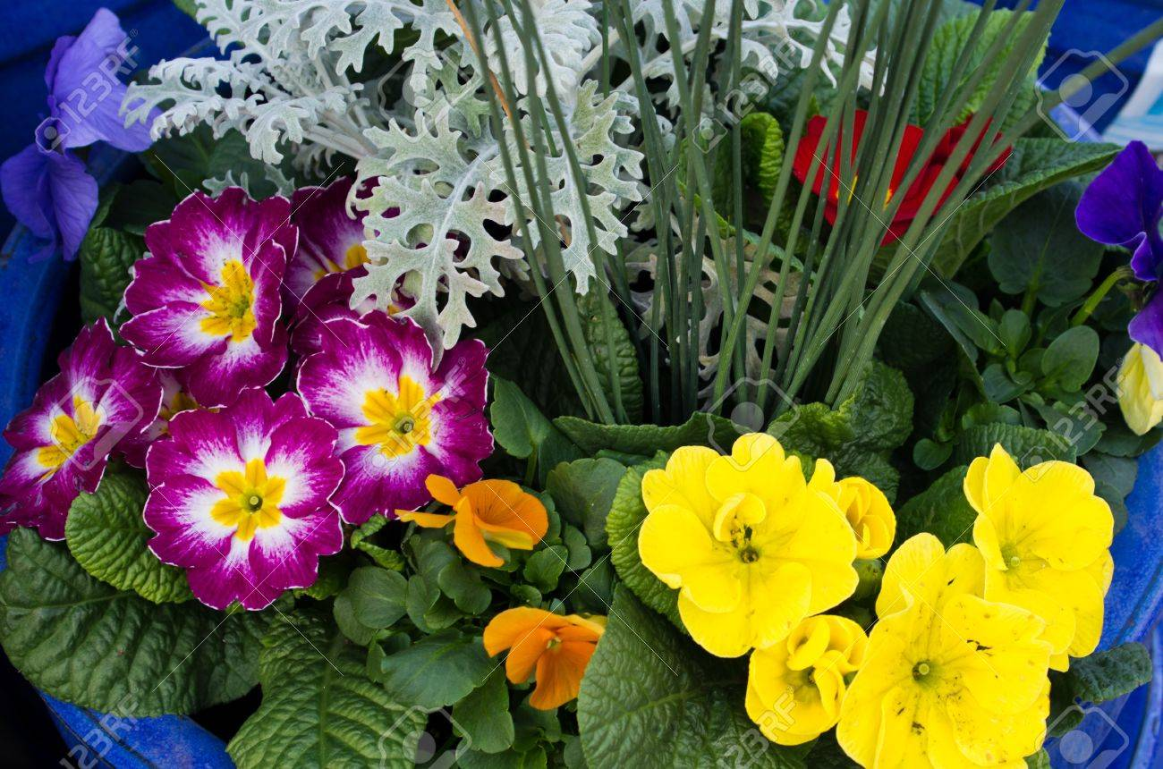A Flower Arrangement With Purple And Yellow Primroses Stock Photo
