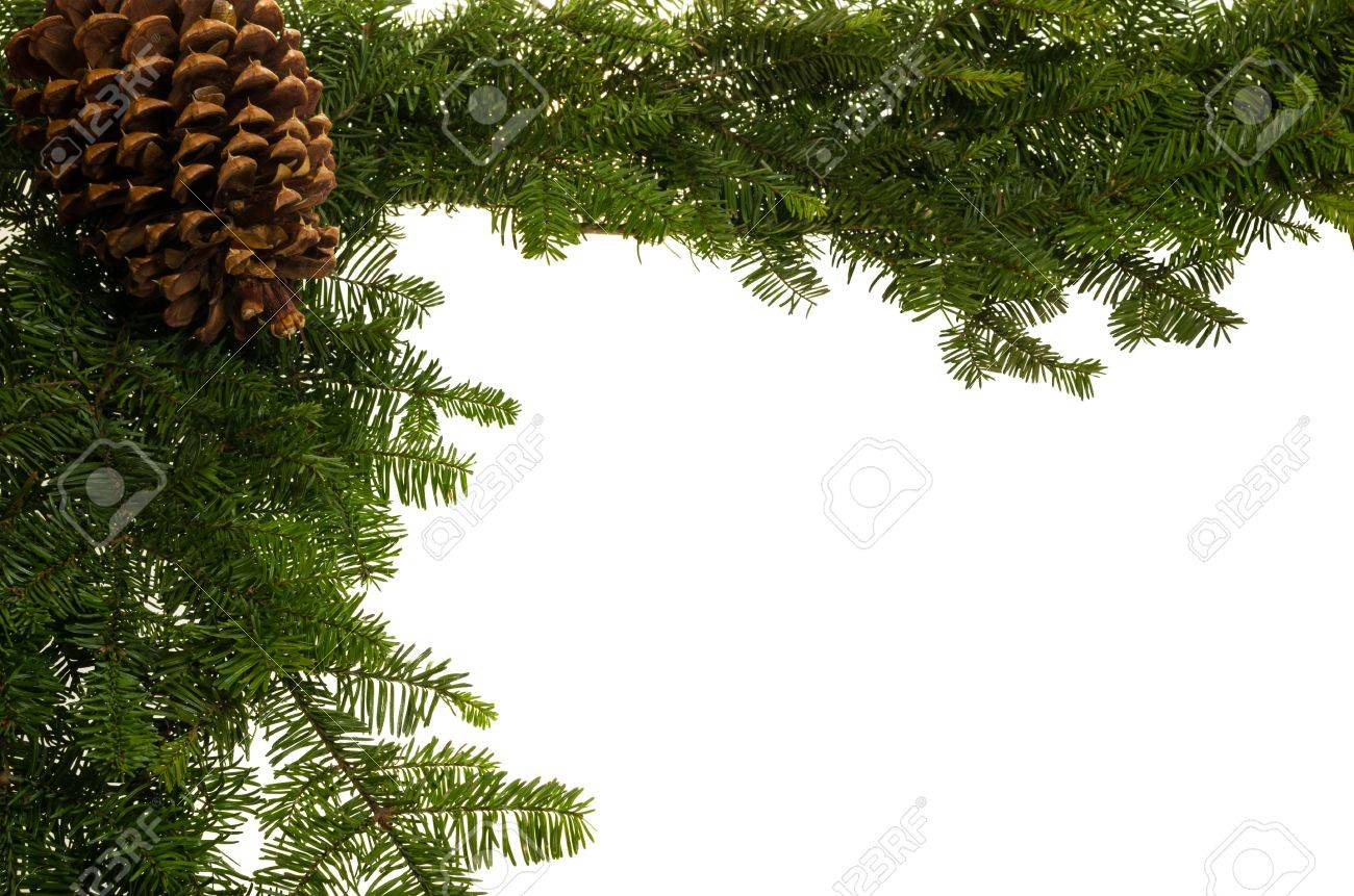 Christmas border of fresh greens and a large pine cone Stock Photo - 14608057