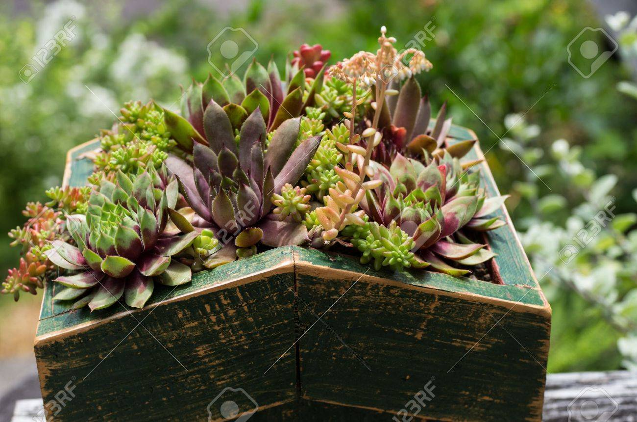 Green roof of sedum plants used for sustainable construction - 14608056