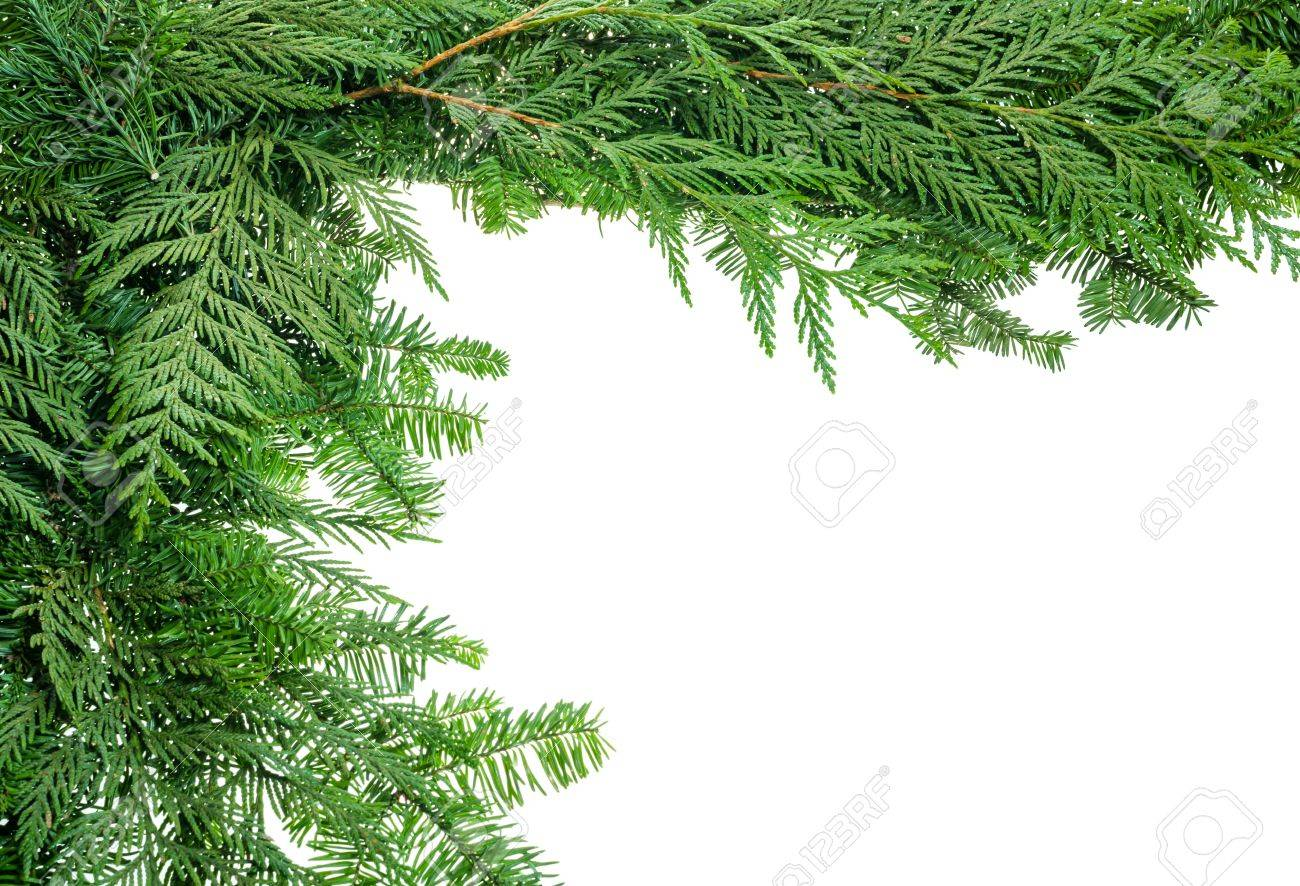 A holiday border from evergreen branches Stock Photo - 16442432