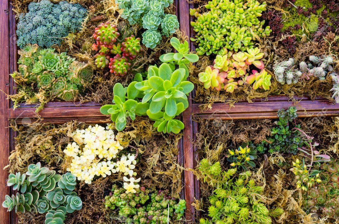 Sedum Und Sempervivium Pflanzen Fur Dachbegrunung Anwendungen