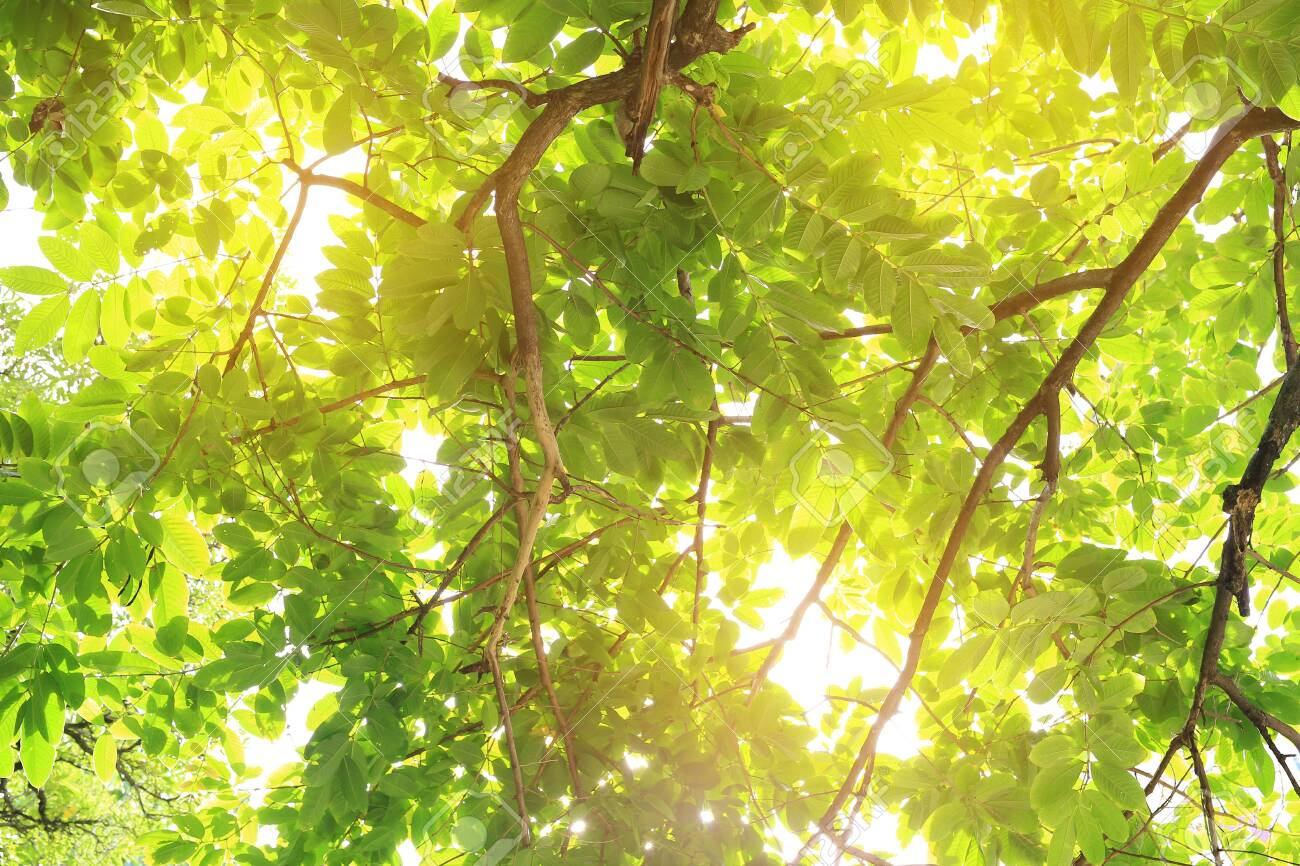 The sun shines through the trees in the forest. - 141255003