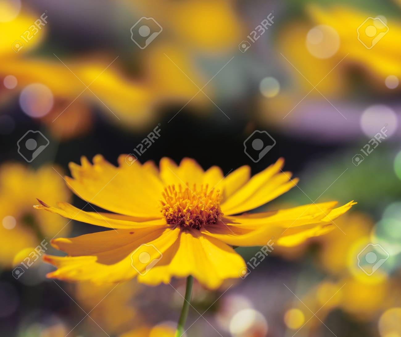yellow flower on a colored background Stock Photo - 14294533