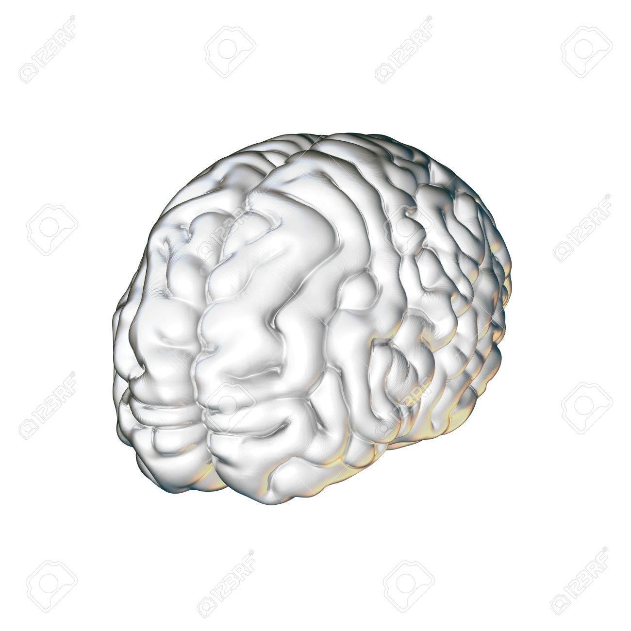 Nett Bild Des Gehirns Markiert Ideen - Anatomie Ideen - finotti.info