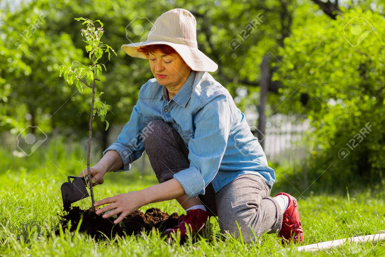 Wearing summer hat. Appealing aged woman wearing summer hat digging ground near just planted tree - 125362254