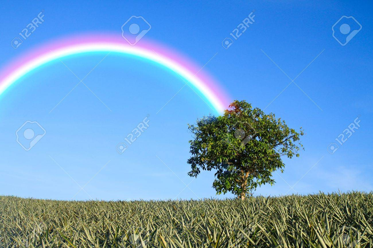 lonely tree on green field in clear nature Stock Photo - 11475102