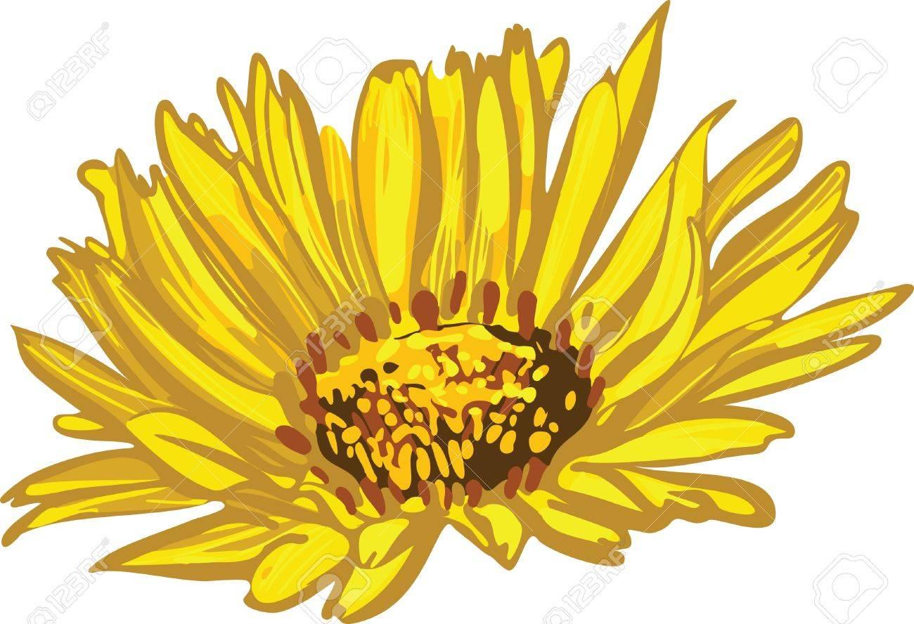 Image Of Wildlife Plants Yellow Flower Daisy Aster Chrysanthemum