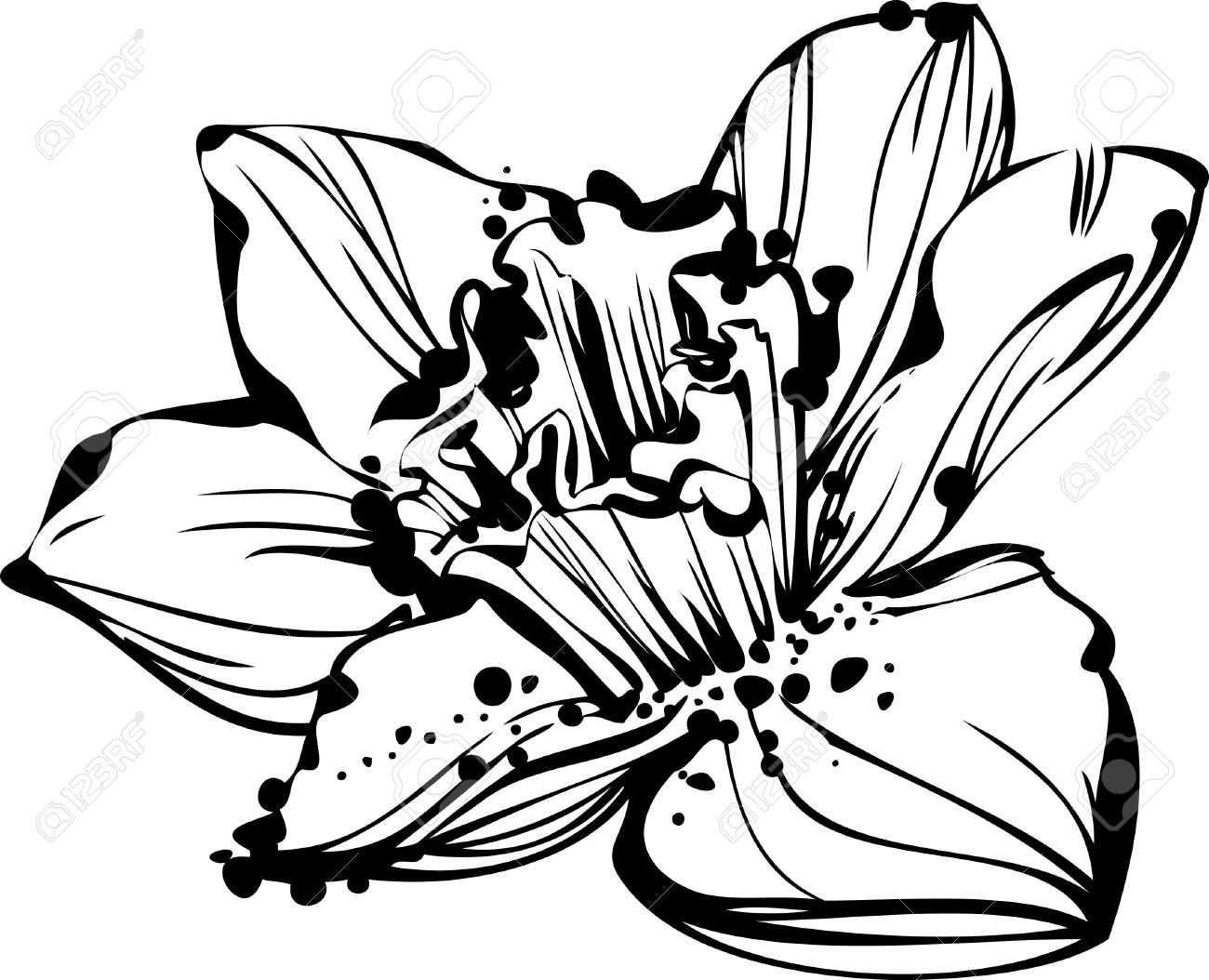 black and white picture sketch bud Narcissus Stock Vector - 10345111