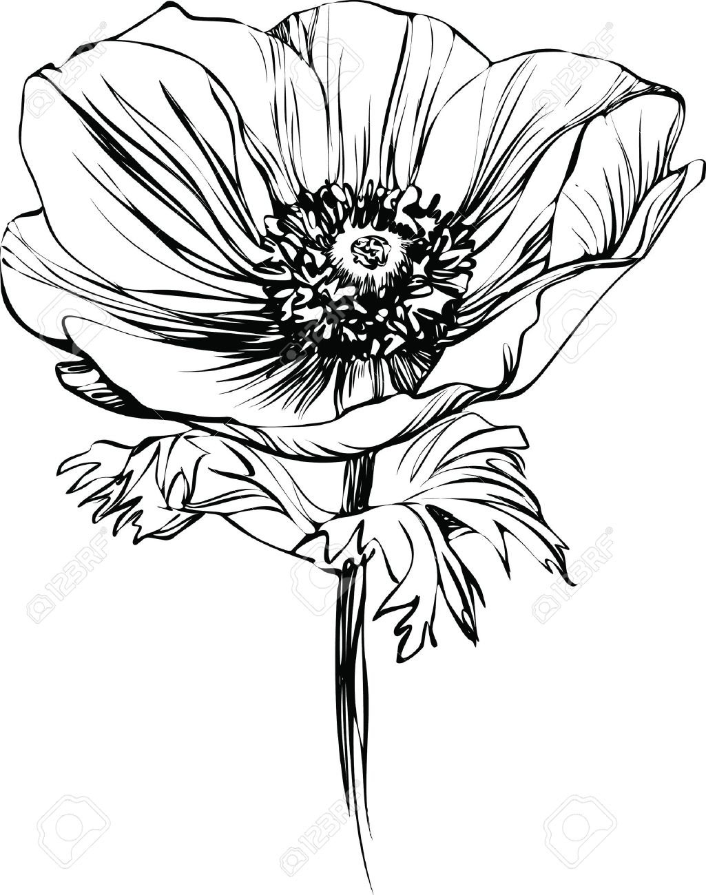 Black And White Picture Poppy Flower On The Stalk Royalty Free