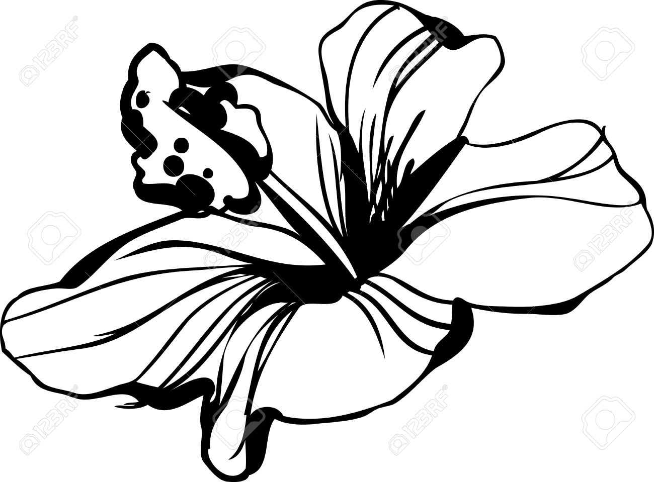 Line Art Flower Drawing : Sketch blossoming hibiscus flower bud royalty free cliparts