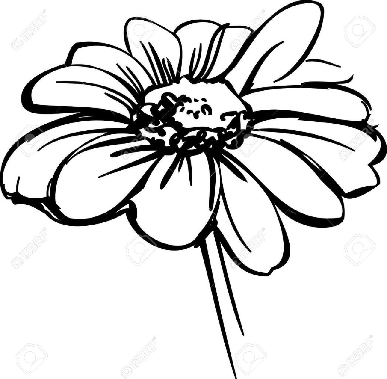 Fleurs Sauvages Ressemblant A Dessin D Une Marguerite Clip Art