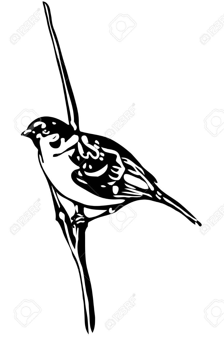 Black And White Vector Sketch Of A Little Bird On Branch Sparrow Stock