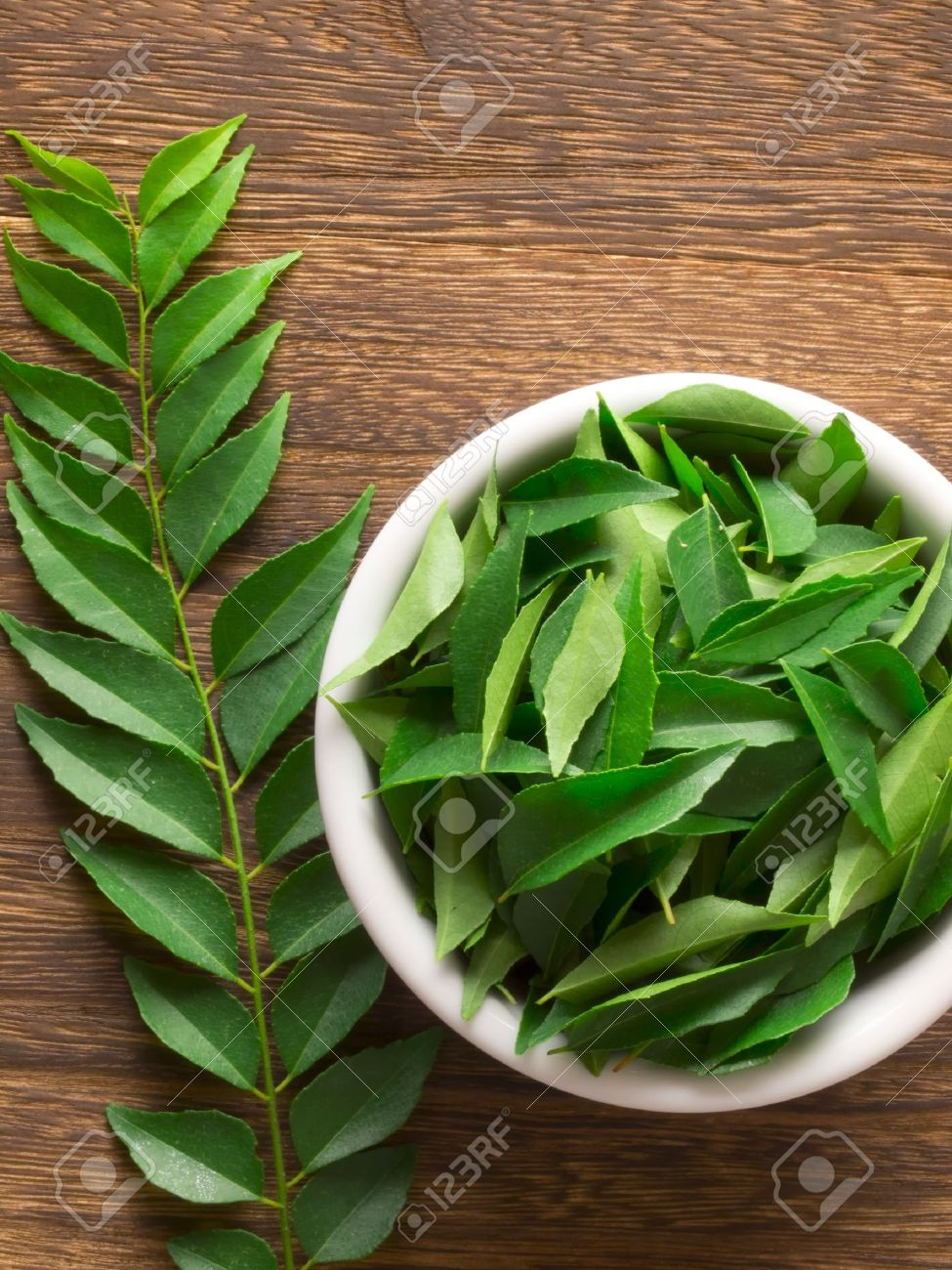 close up of fresh indian curry leaves Stock Photo - 11547428