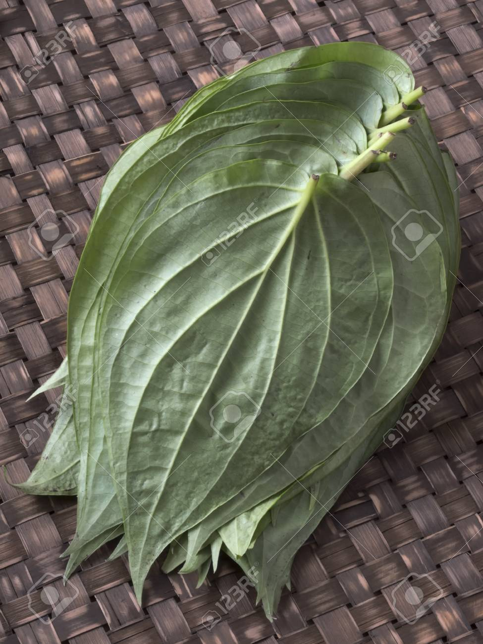 close up of a heap of betel leaves Stock Photo - 17447837