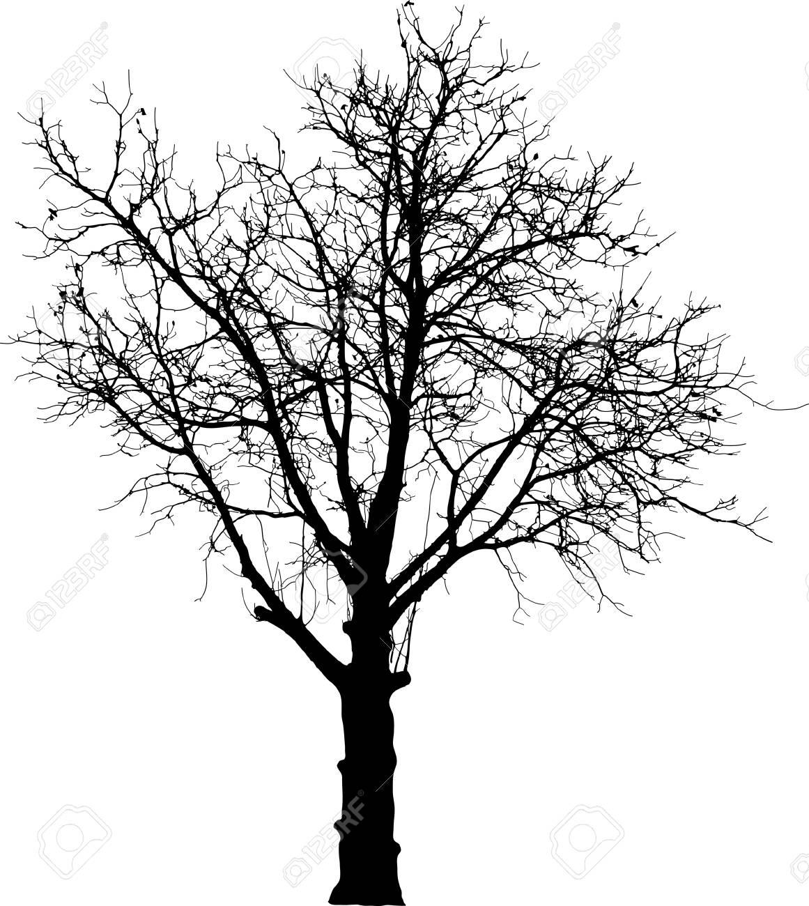 naked nut tree Stock Vector - 7296036