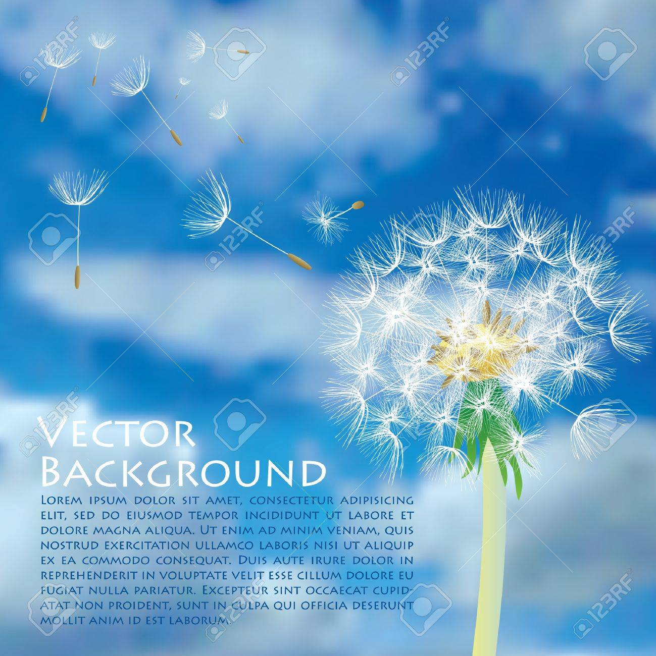 vector dandelion with flying seeds on cloudy sky Stock Vector - 9717676