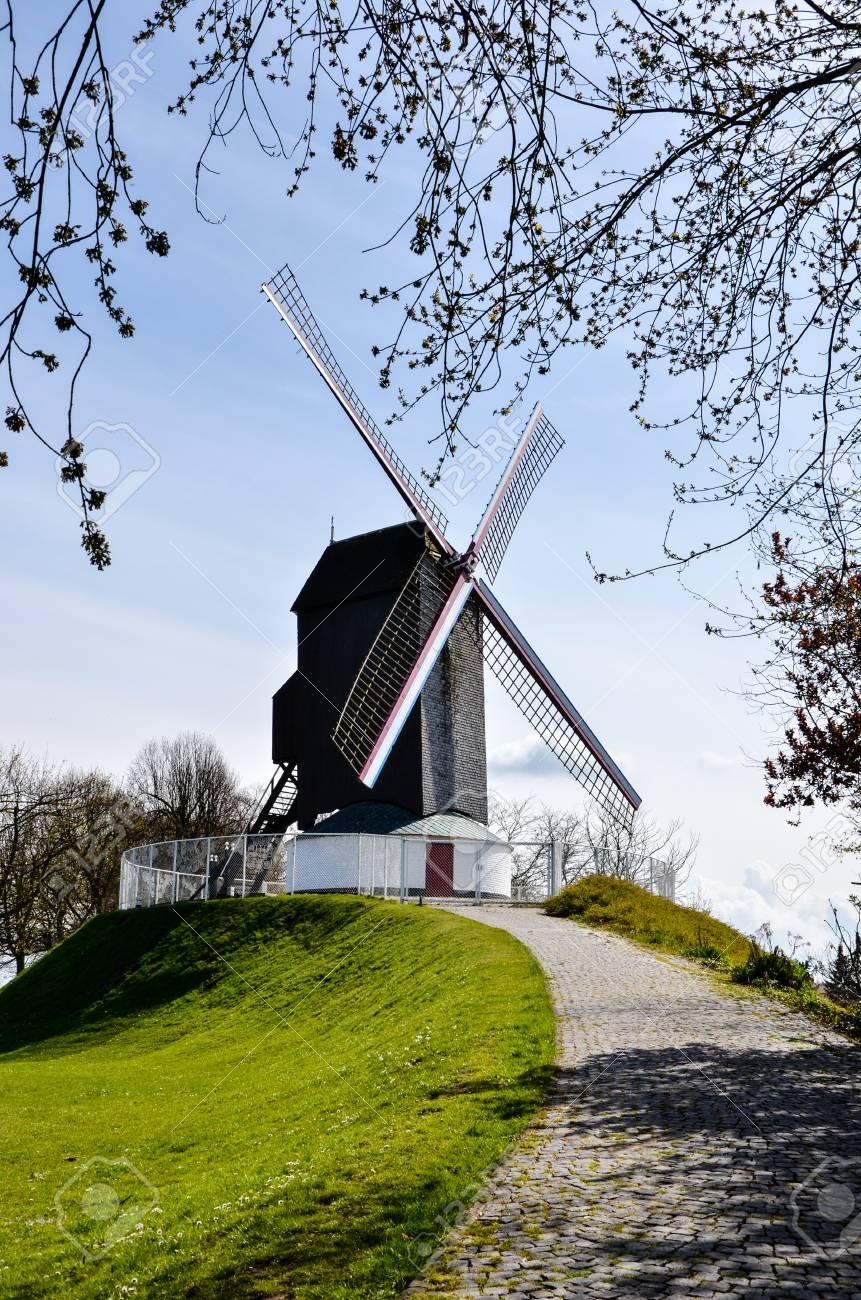前景の木の横にある緑の芝生と石畳の通路は、ベルギーのブルージュの丘 ...
