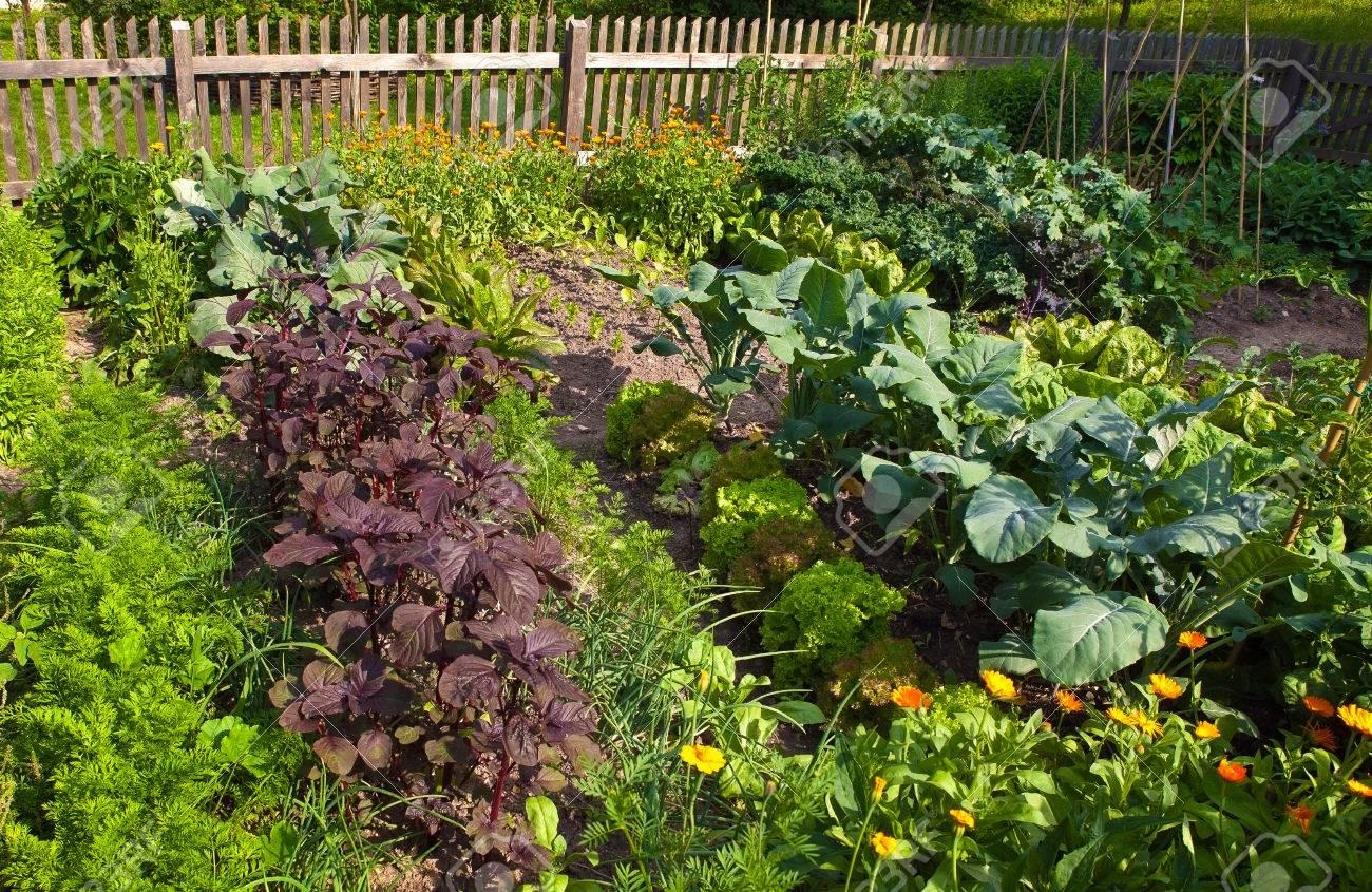 kitchen garden Stock Photo - 23497253