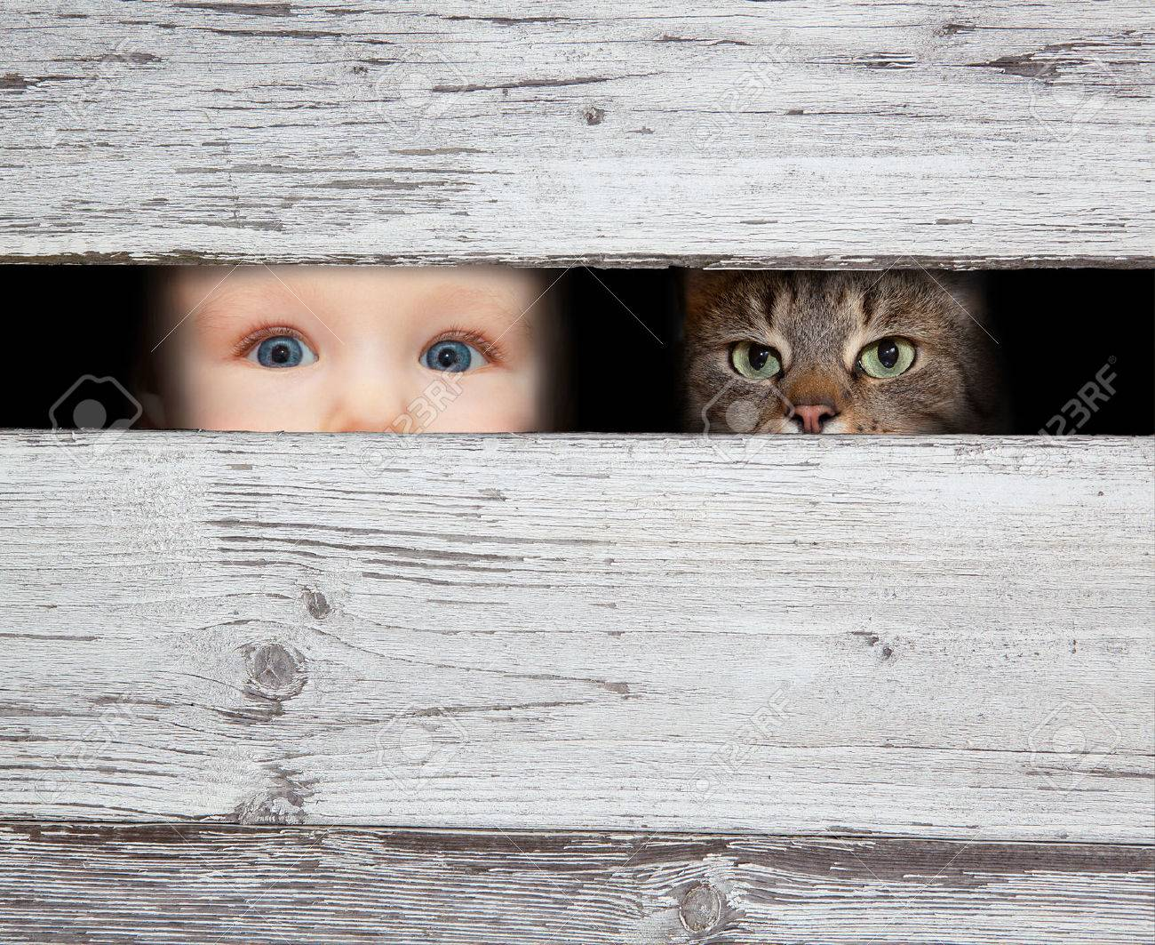 little boy and the cat looking between the gap of the boards Stock Photo - 25887195