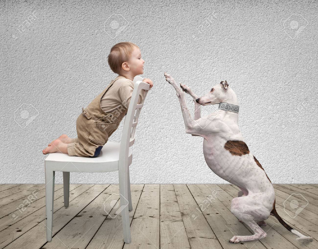 little boy and a dog playing in the room Stock Photo - 32369195