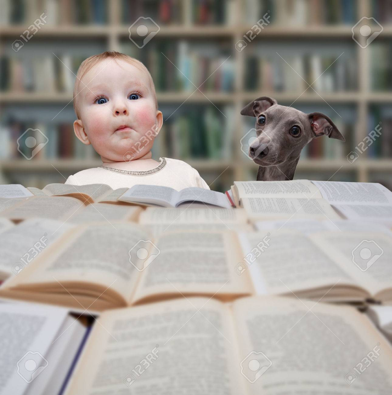 child reading a book in library Stock Photo - 49590943