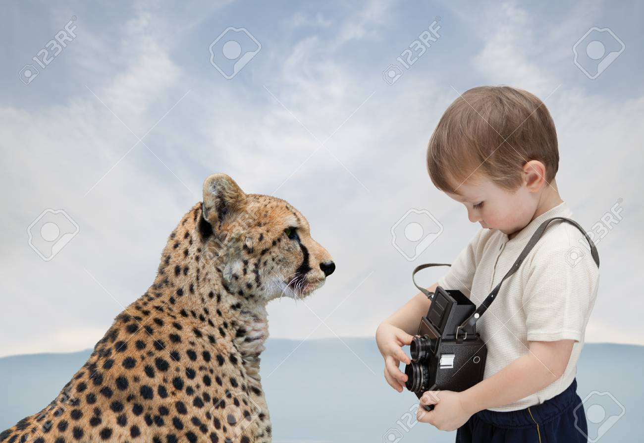 little boy with old camera photographs big cat stock photo picture