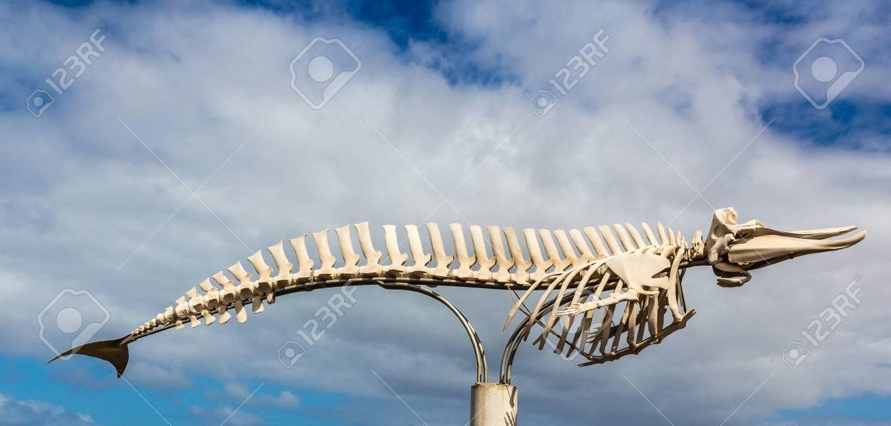 Esqueleto De Ballena - El Cotillo, Fuerteventura, Islas Canarias ...