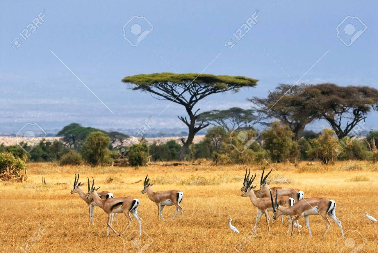 African Landscape With Gazelles, Amboseli, Kenya Stock Photo ...
