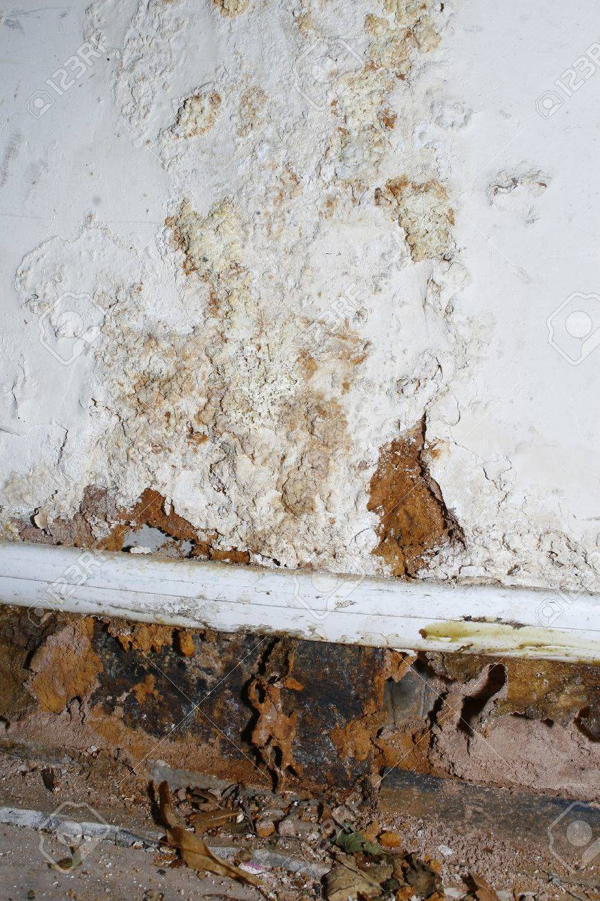 Black Mold Symptoms In Toddlers