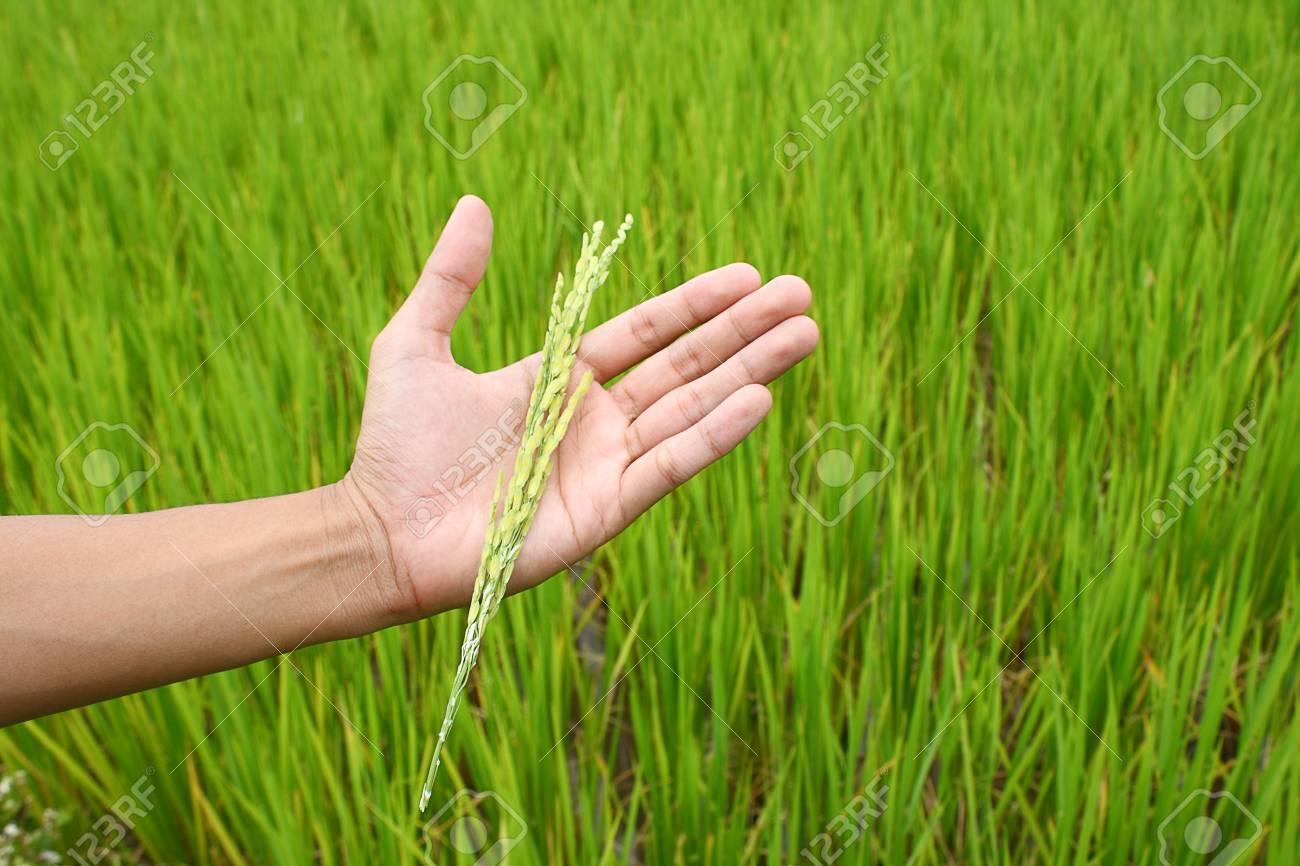 Rice Stock Photo - 10671358