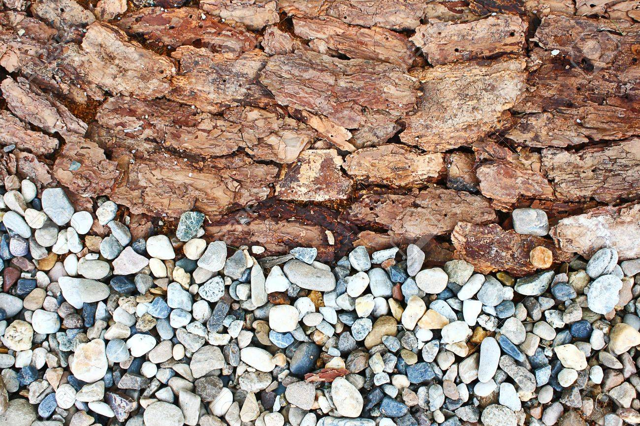 rock bark texture Stock Photo - 11616986