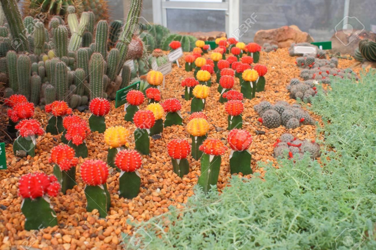 Cactus Stock Photo - 11990420