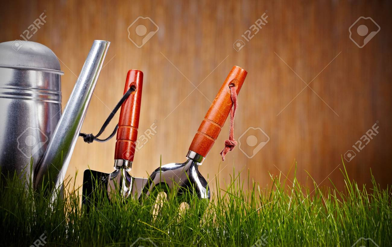 Fresh greenon wooden wall with garden tools Stock Photo - 8938352