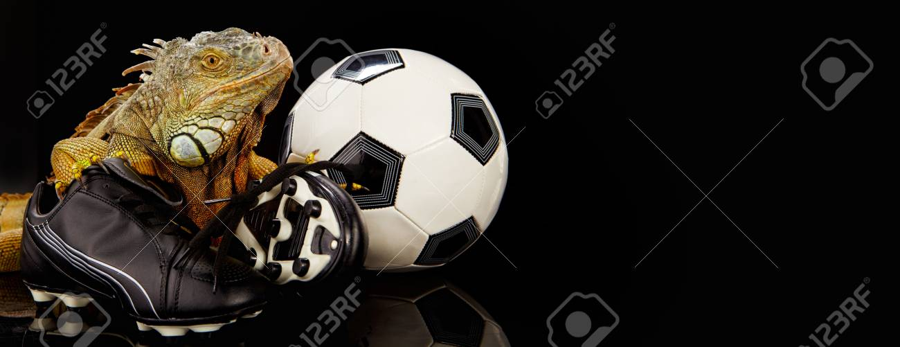 Iguana in football concept Stock Photo - 10445750