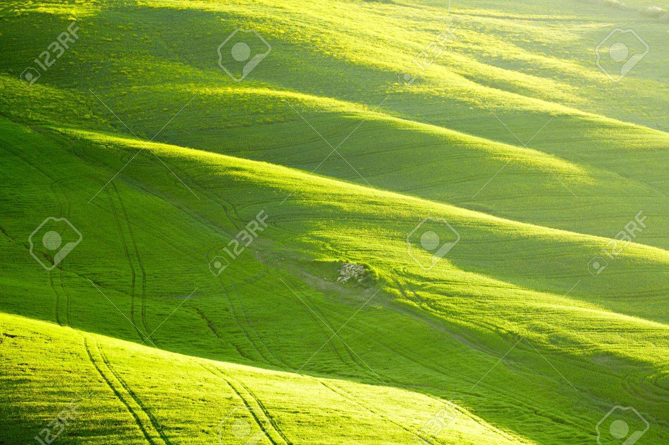 Countryside, San Quirico d´Orcia, Tuscany, Italy Stock Photo - 19842313