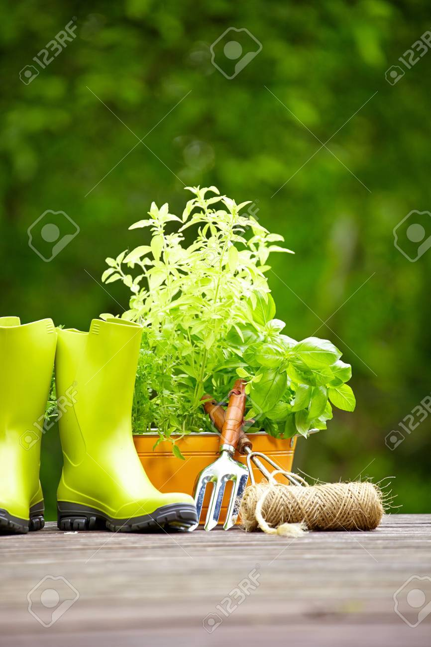 Fresh herbs in wooden box with garden tools on terrace Stock Photo - 20617411