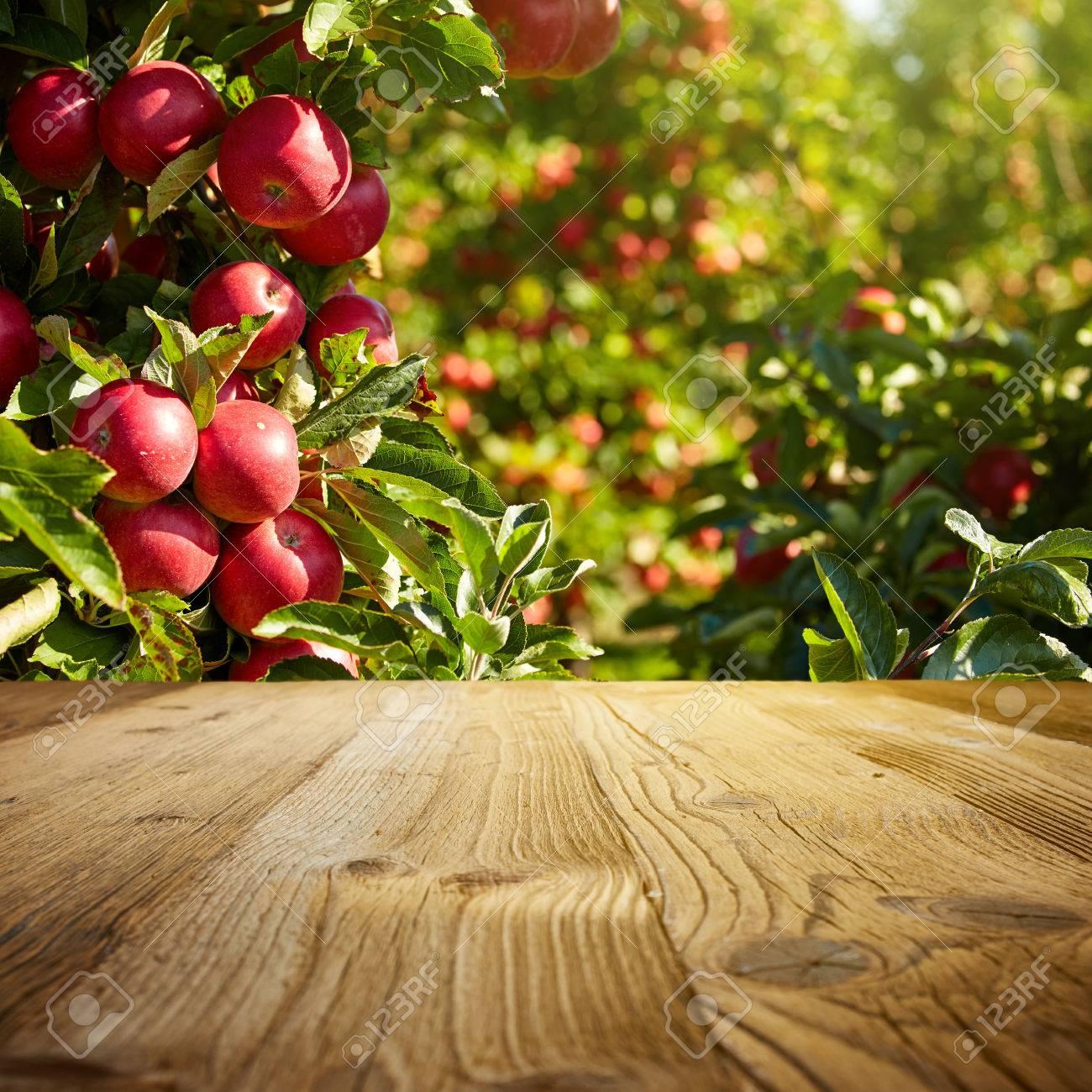autumn apple orchard background - 46374535