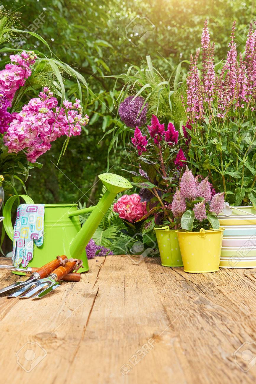 Gardening tools on the terrace in the garden - 51591586