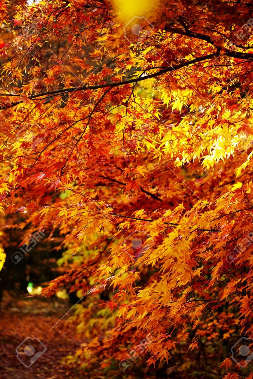 Beautiful Autumn Park Fall Trees And Leaves Autumn Landscape