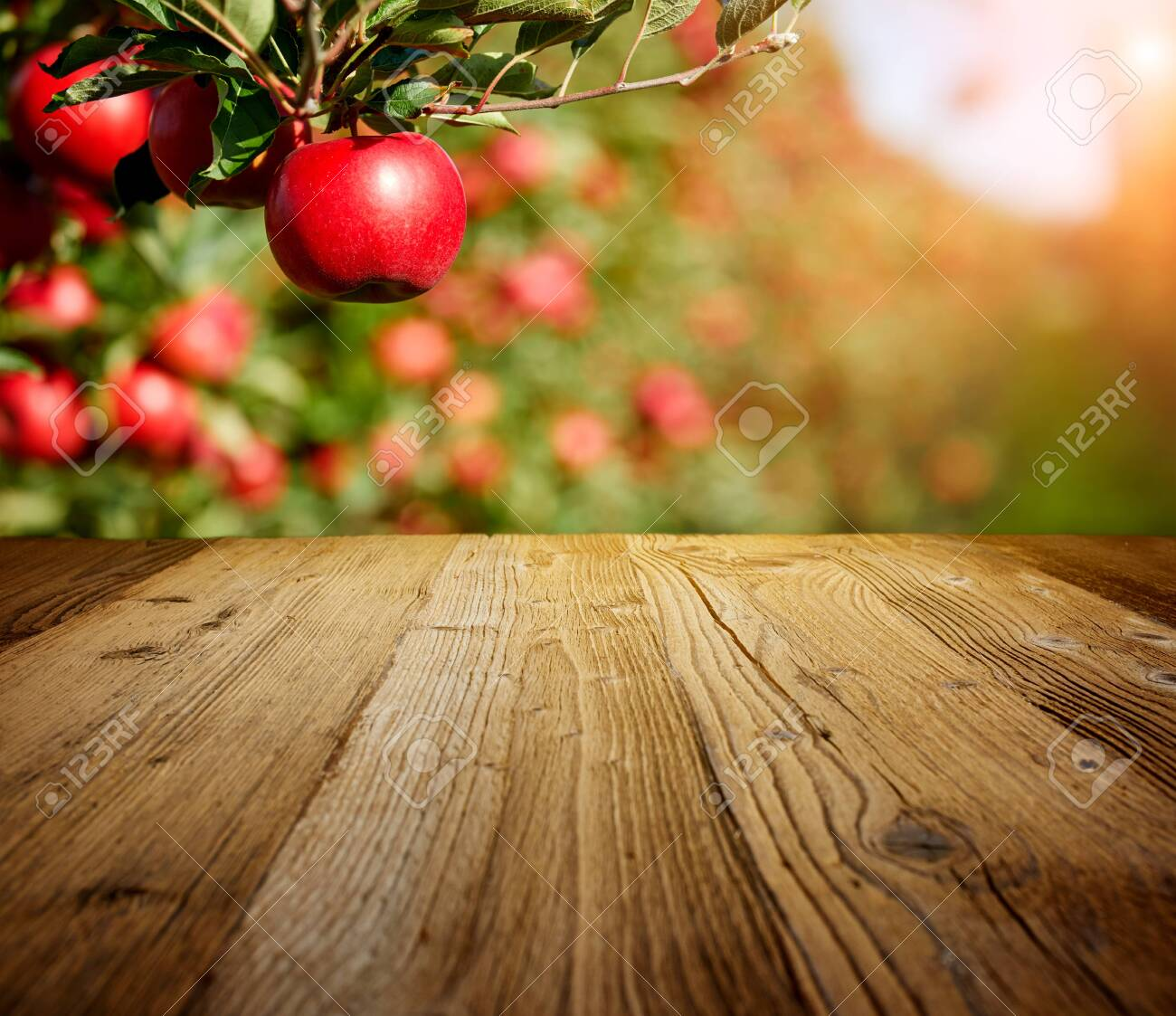 table space and apple garden of trees and fruits - 130205933