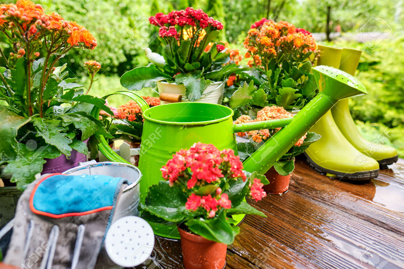 Spring plants and garden tools frame or border over rustic wood with copy space with gloves, watering can, flowerpots, soil, trowel and seedlings for transplanting - 149666150