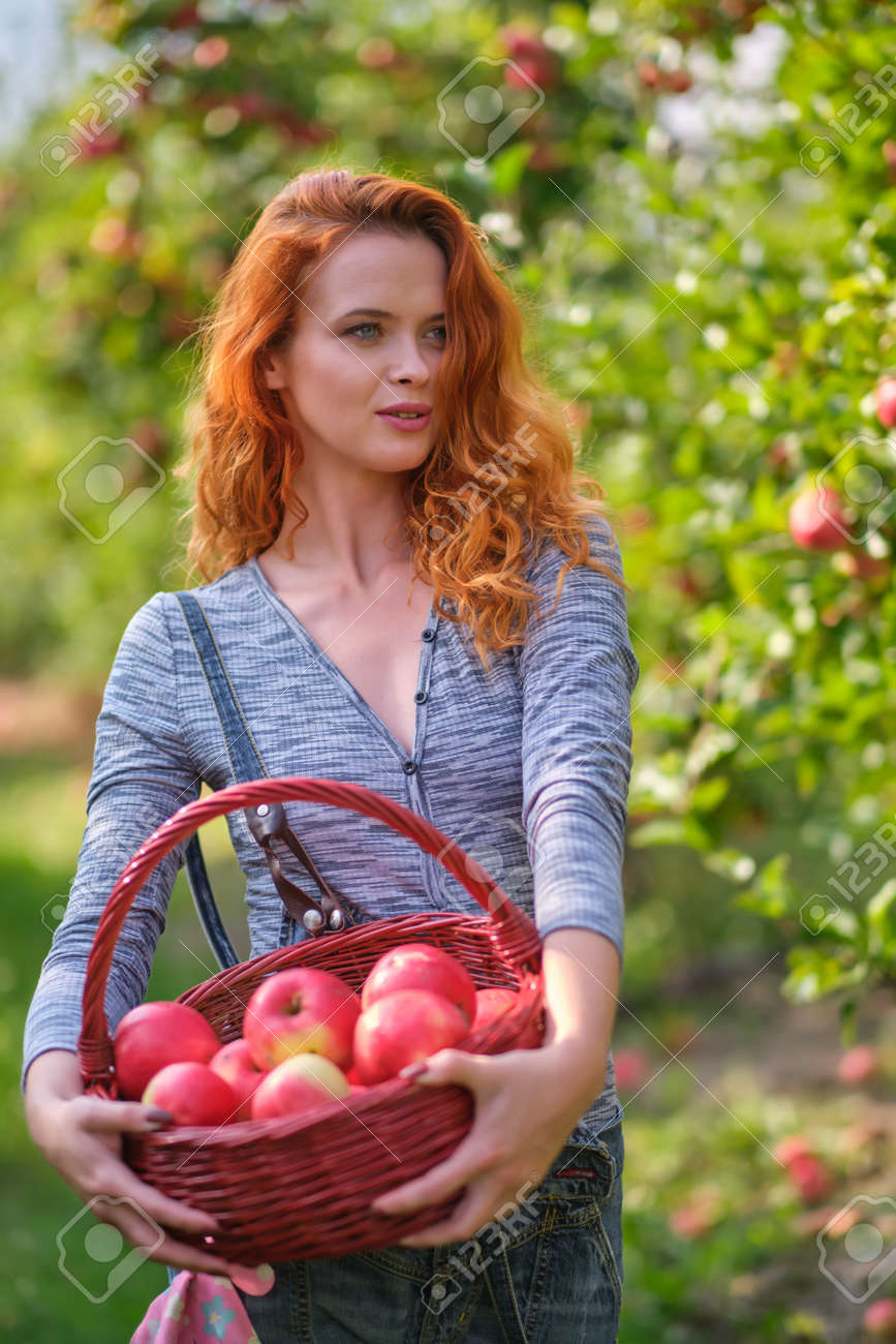 Young red haired woman picking ripe organic apples in wooden crate in orchard or on farm on a fall day - 163057246