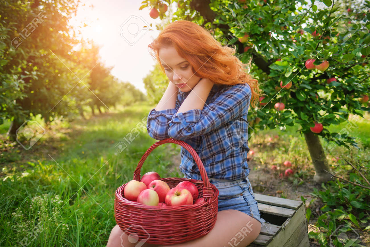 Young red haired woman picking ripe organic apples in wooden crate in orchard or on farm on a fall day - 163057252